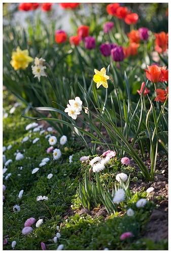 spring flowers by loretoidas, via Flickr