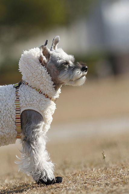Doggie jacket!