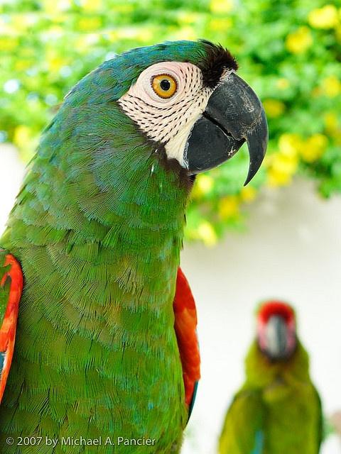 I love parrots.