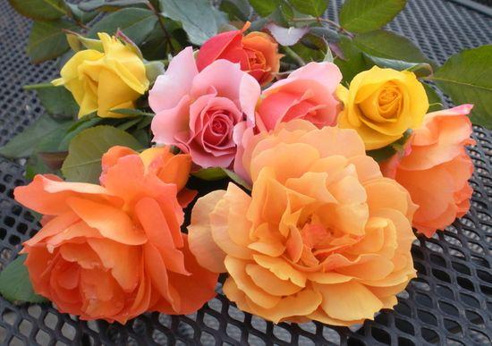 Pretty Colored Roses