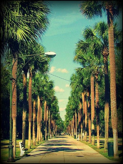 ardsley park, savannah, ga