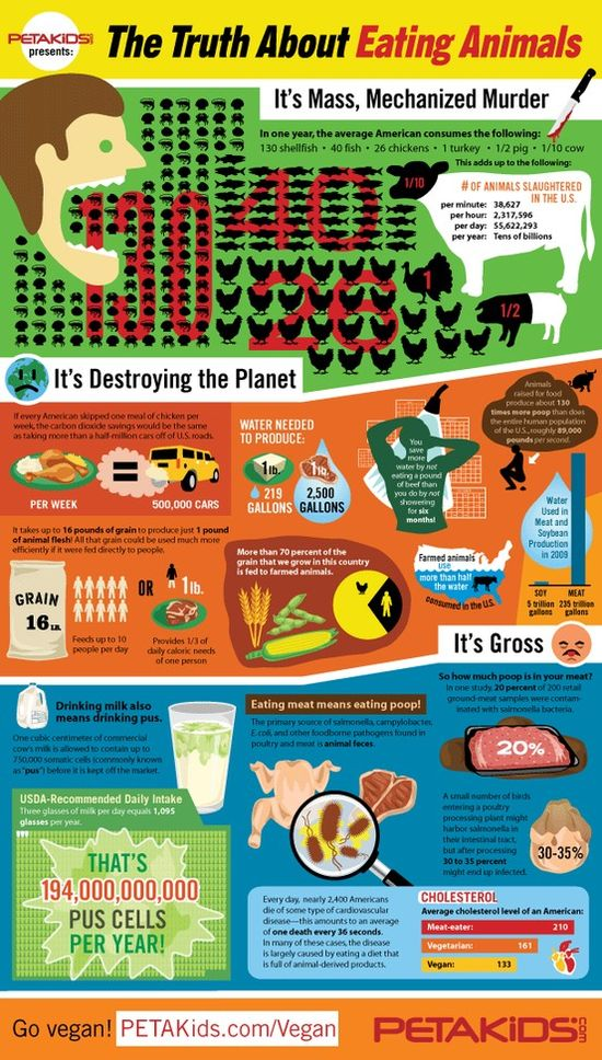 The Truth About Eating Animals: www.petakids.com/... #eatinganimals #infographic #PETAKids #animals #food #animalrights #facts #govegan #veganism #environment #water #activism #helpanimals #neverbesilent