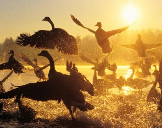 Beautiful Wild Life Animals Photography (1)