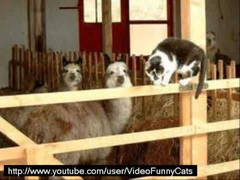 Funny cats poster moment video compilation