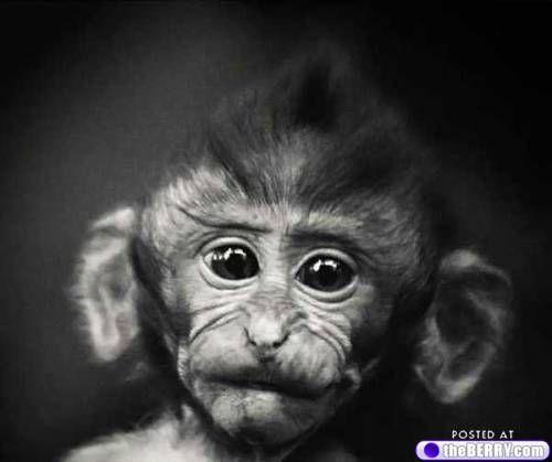 I'm a sucker for baby monkeys