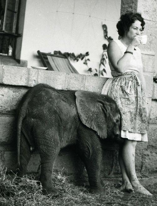I want a pet baby elephant.