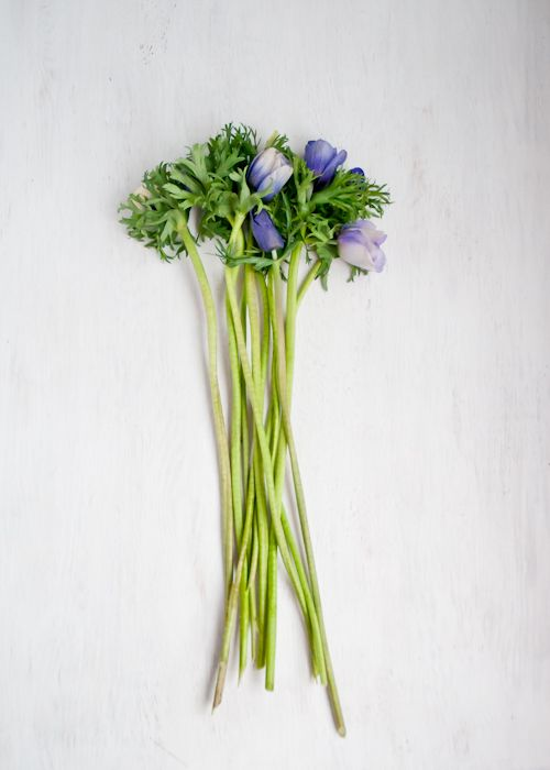 Follow these tips to keep cut flowers fresh longer!