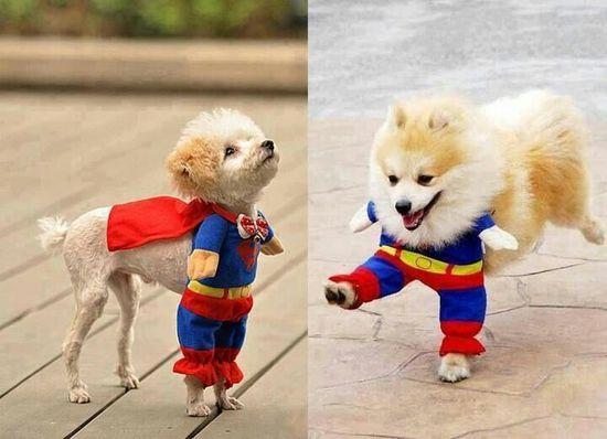 So cute! Lol