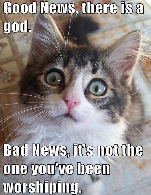 bad news through baby animals