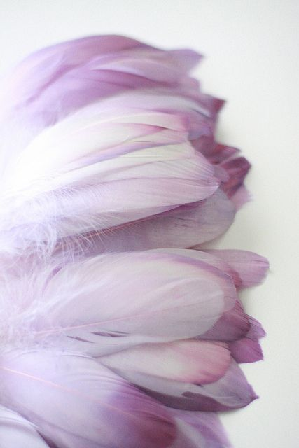 Hand-dyed purple feathers