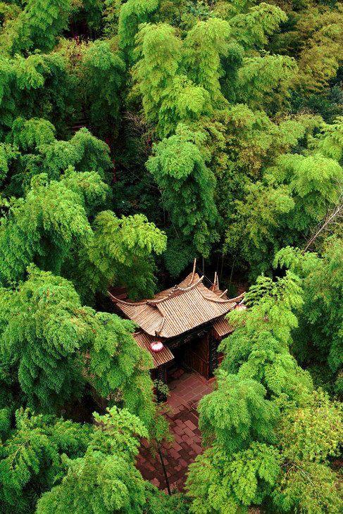 Дълбоко в горите—Шанхай, Китай