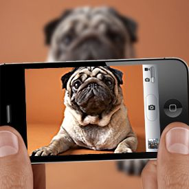 "How to Take Better Photos With Your Smartphone.  I always disliked using the flash on my iPhone, until I read about this tip at PCMagazine.   Cut a small piece of wax paper (from your kitchen cupboard) and slide it between your iPhone case and iPhone to cover the flash. Your iPhone camera will now have a diffused flash and will no longer make your images ""glow""."