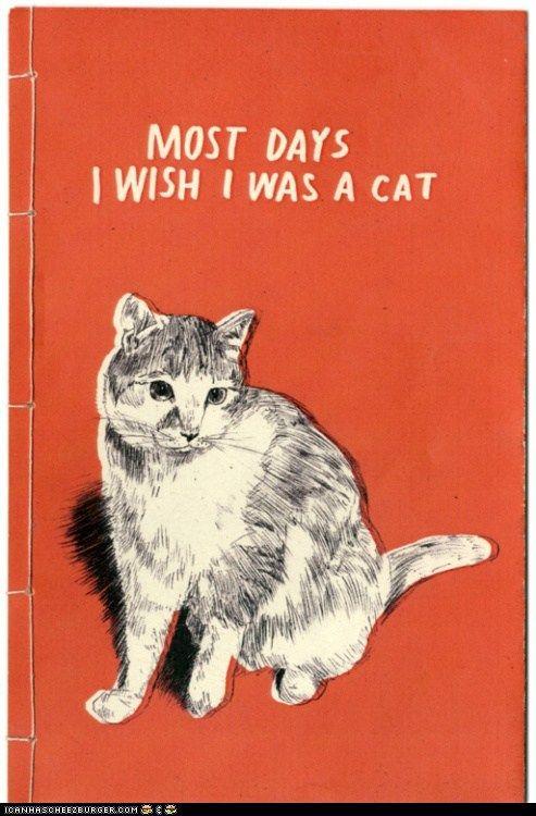 Most days I wish I was a cat.