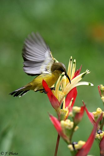 Bird on Flower - Nice Shot !
