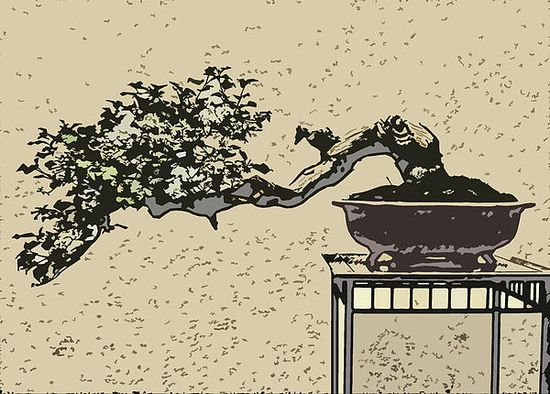 & a Bonsai...In Art Form