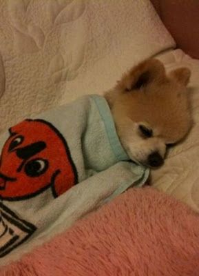 sleeping baby dog