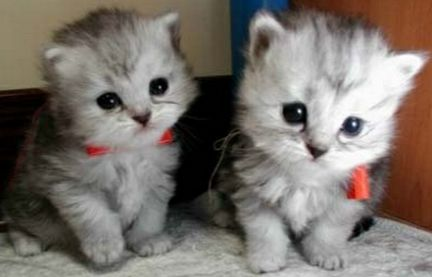 It's not possible to be upset about anything with these two munchkins looking at you. o_o