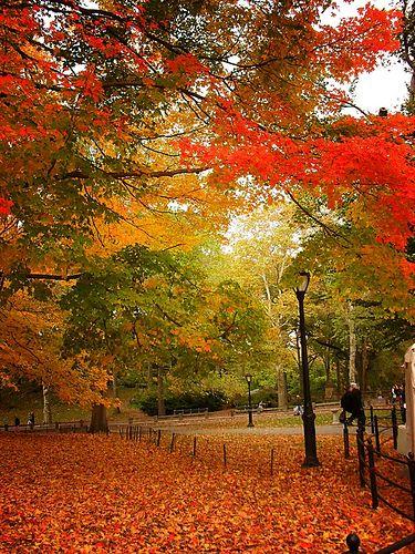 Autumn - Central Park, New York City #teatime www.facebook.com/...