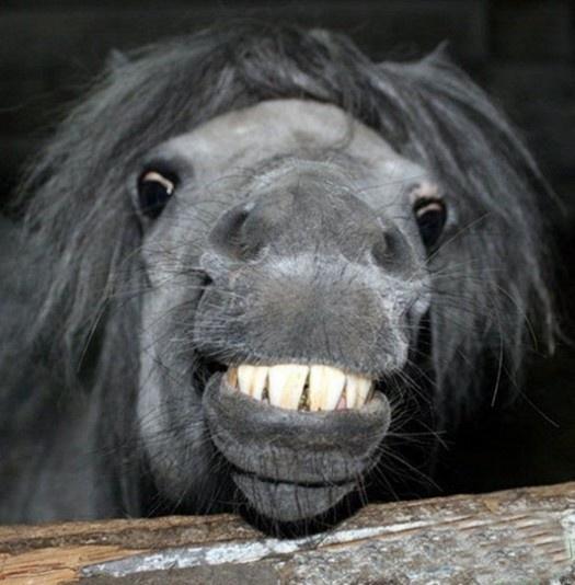 laughing-animals