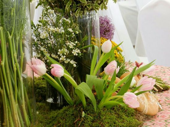 Tulipanes y otros bu
