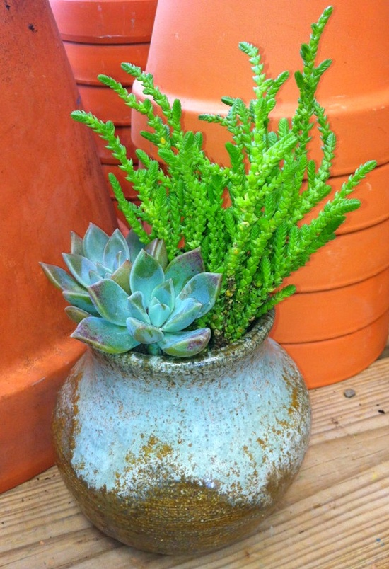 Handmade Pottery Succulents