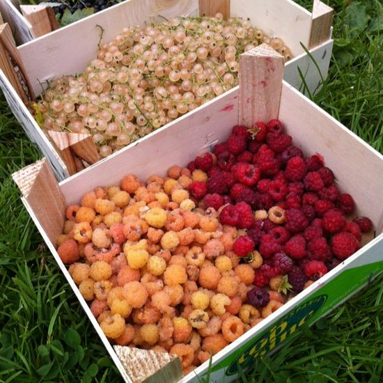 Fresh raspberries and currants #healthy #food