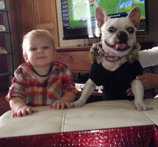 Baby boy French Bulldog
