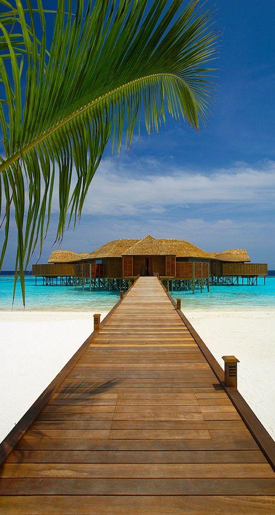 Maldives Lily Beach
