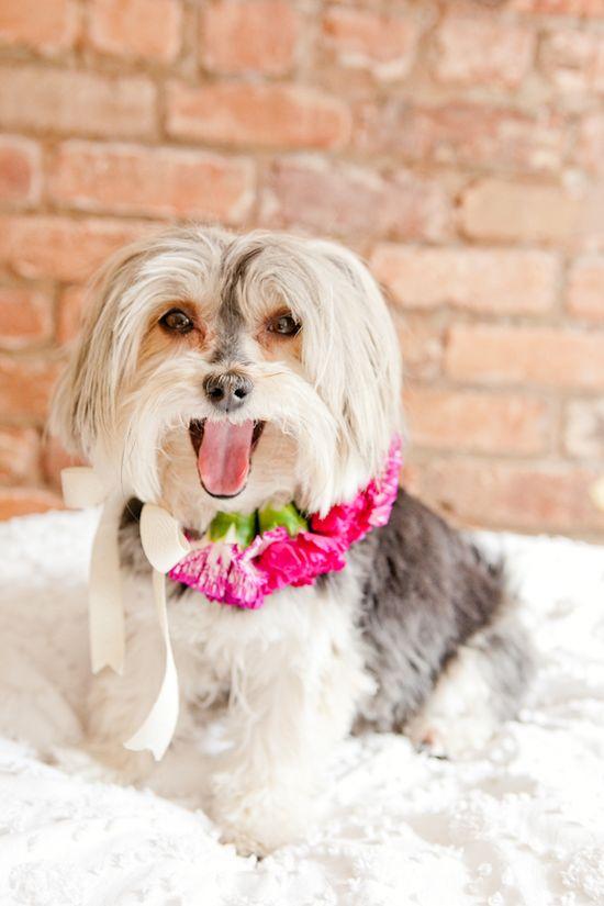 Wedding dog Toni Kami ?Flowers in their coats?