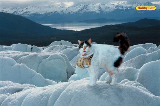 Hobby Cat: St Bernard by McCann Erickson     Animals in Print Ads