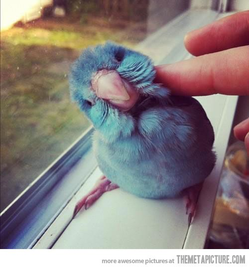 That is such and adorable bird!!