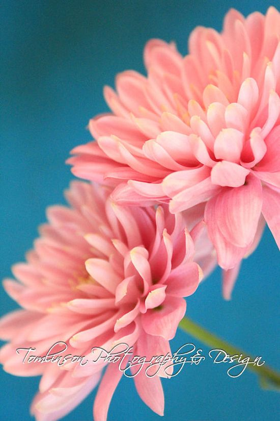 #Turquoise and Pink Interior Decor, #Etsy #Photography - Matted Art Print