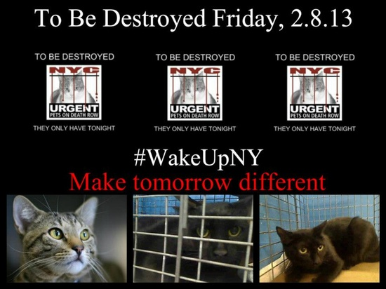 There are *3* ADOPTABLE cats in danger.    Please start sharing NOW!!! The shelter closes at 8pm. Go to the ACC website (www.nycacc.org/...) ASAP to adopt a PUBLIC LIST cat (noted on their profile) and/or work with a rescue group if you can adopt/foster ANY of our cats on the list tonight. Further instructions, and a list of rescues can be found here: www.facebook.com/...