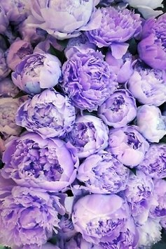 Lovely lilac peonies - Wedding Color Inspiration