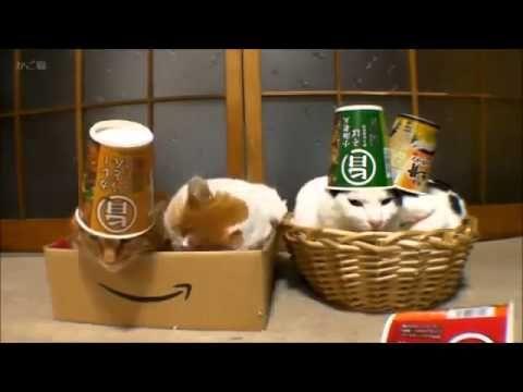 Sleeping cats in hats Funny Video Funny Animal Videos - videos.artpimp.bi...