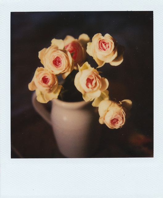 {roses} a pretty Polaroid