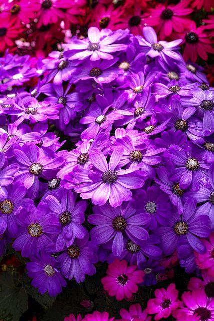 Spring Flowers - Sooo Pretty !