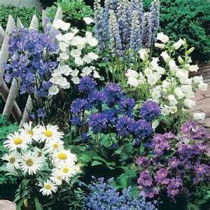 Blues, whites and purples....makes for a beautiful perrenial flower bed