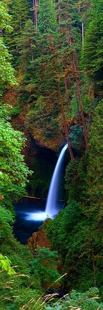 Deep Forest Falls  COLUMBIA RIVER GORGE NATIONAL SCENIC AREA, OREGON
