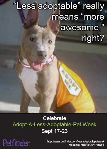 It's Adopt-A-Less-Adoptable-Pet Week! Click through to learn more about why we're celebrating these fantastic pets.????