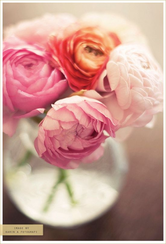 blooms x