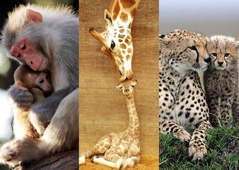 Aww! 10 Baby Animals with Their Moms