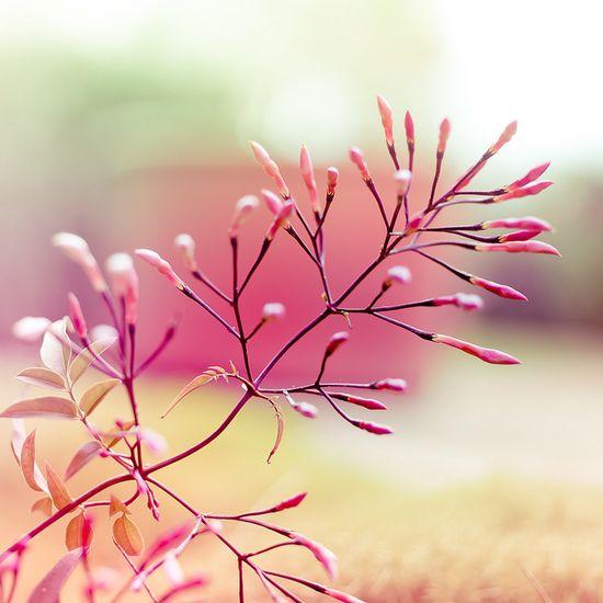 Flower by ?CubaGallery, via Flickr