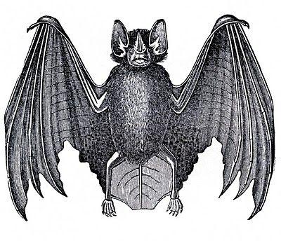 vintage halloween bat clip art