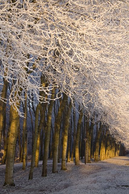 ? Frosted Trees