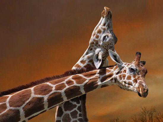 animal photography wild life award