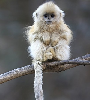 This little monkey reminds ne of how cute & sweet our own pets are. Look at that precious face! But, of course...he's a wild animal & would probably bite your hand off! :)