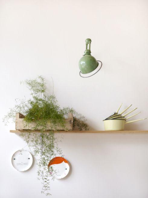 kitchen shelf with plant