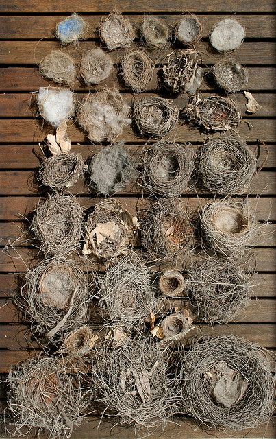 A collection of birds' nests.