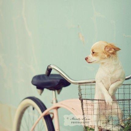 bella as a puppy?
